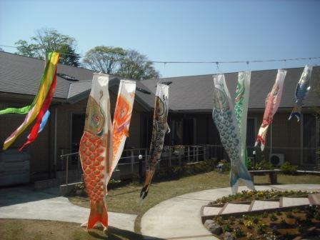 晴れた日の鯉のぼり